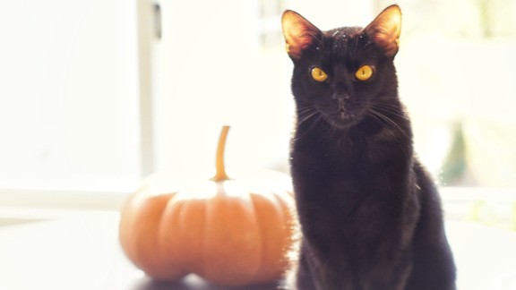 "Salem is ""the quintessential black cat,"" with fur ""softer than silk"" and ""unbelievably expressive"" yellow eyes, says Brandon Blatter. He suggests experimenting with exposure when photographing a black pet. ""By overexposing the photo, more detail is brought out of their black fur,"" he says."