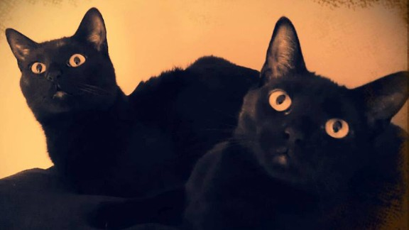 "Eric Blaylock has had black cats for most of his life. When he introduced fiancee Julie Predny to their magic, she was surprised. ""There's a fearlessness about them I've never encountered,"" she said. They now have this pair: Wicca and Pagan. ""We've got two black cats crossing our path multiple times a day, and we couldn't consider ourselves luckier,"" said Predny."