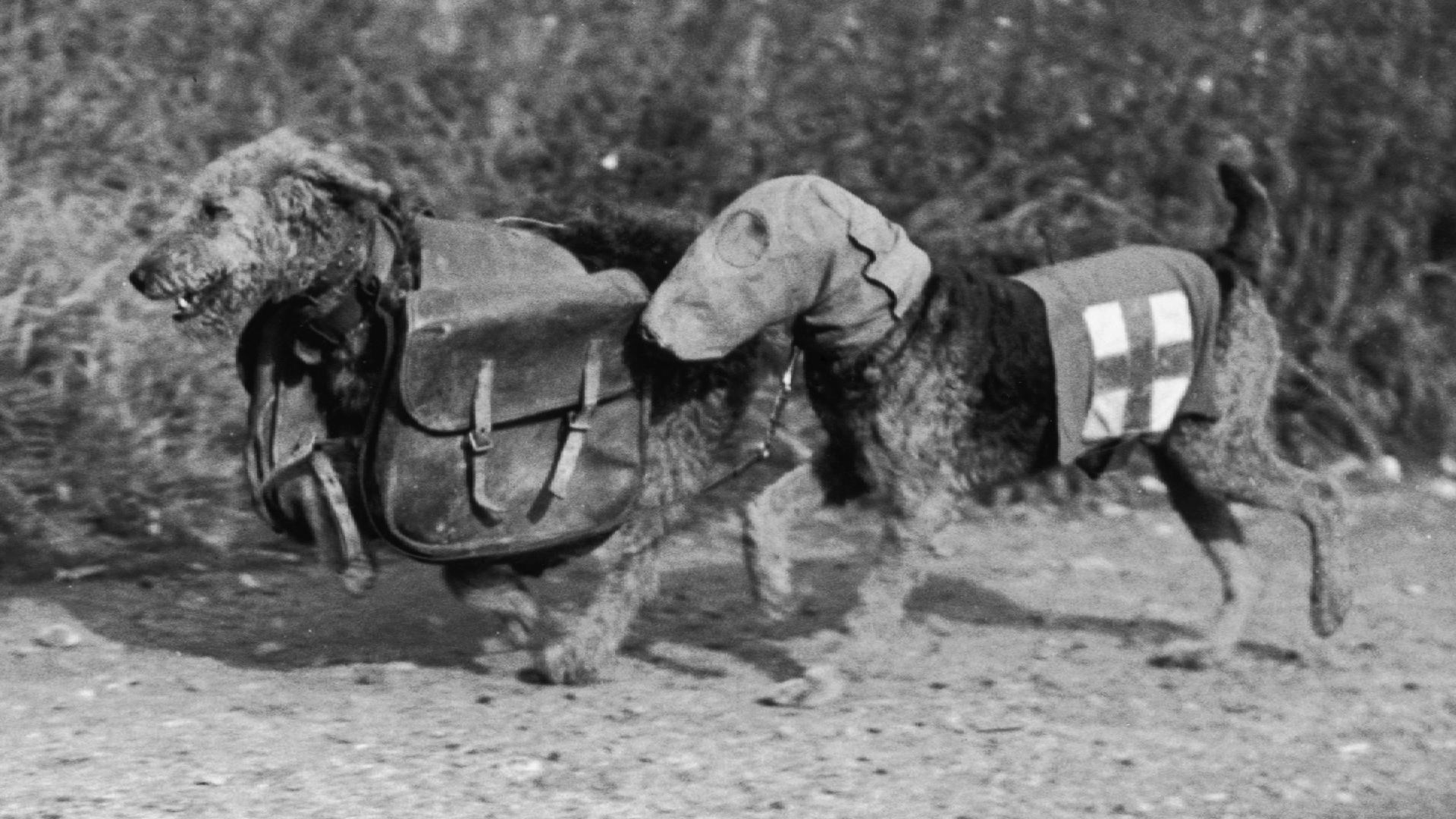 Honoring Britain's WWI 'war dogs' - CNN Video