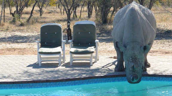 A rhino takes a drink from a pool at Khama Rhino Sanctuary in Serowe, Botswana. The sanctuary