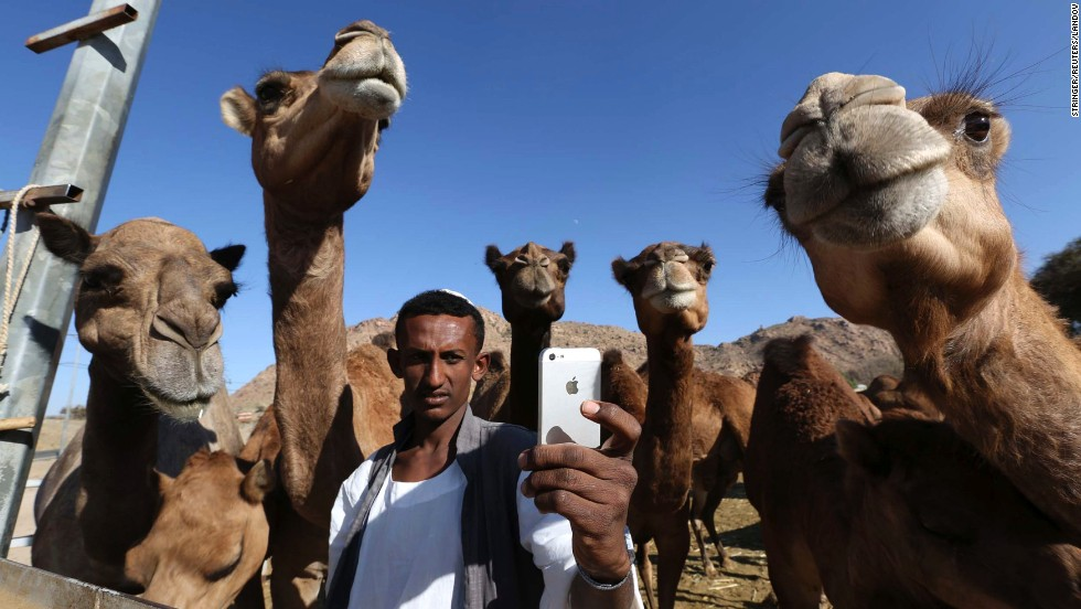 A man takes a selfie with camels at a farm in Taif, Saudi Arabia, on Saturday, November 1.