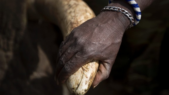 A single tusk from an elephant can bring $30,000, says Leakey. Between 2010 and 2012, some 40,000 elephants were illegally killed each year, according to research published this year in the Proceedings of the National Academy of Sciences.