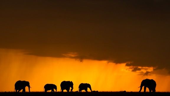 """The fight to save the elephants """"shows that we cherish the world and appreciate its complexities,"""" says Leakey. """"It"""
