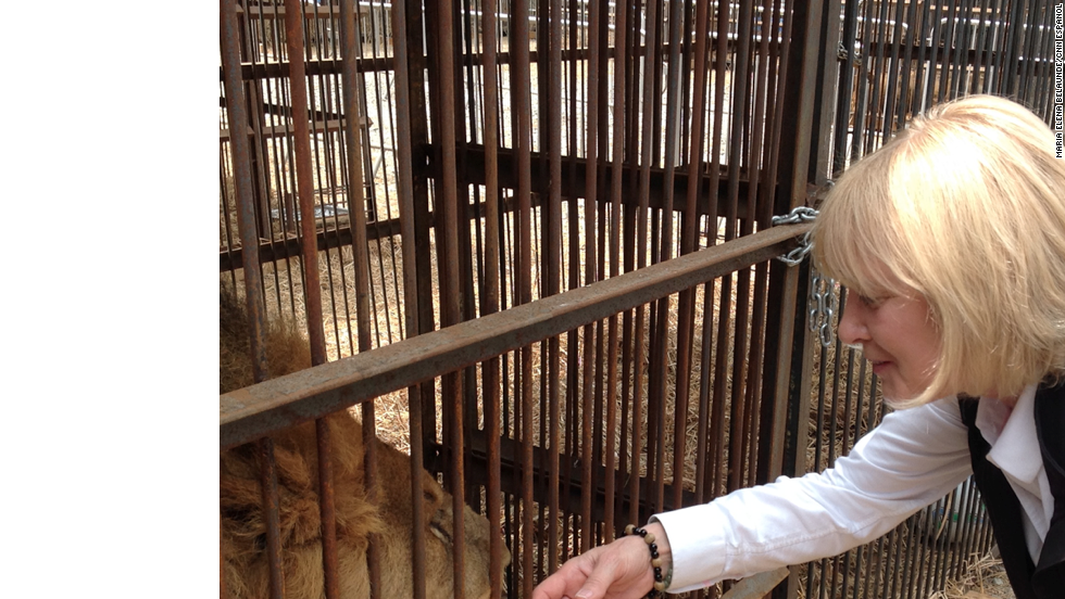 Jan Creamer, presidenta de Animal Defenders International, con uno de los 21 leones rescatados de circos en Perú.