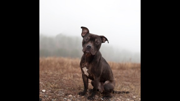 Rejoice, a 3-year-old male pit bull mix, spent 29 days in the shelter before he was adopted.