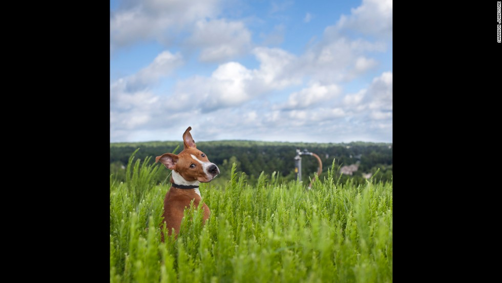 Karsten, an 11-month-old male lab/hound mix, was adopted 115 days after being taken in as a stray. Of the 127 dogs Johnstone has photographed on these symbolic grounds, 108 have gotten homes.