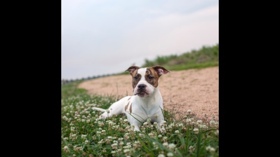 Macedonia, a 1-year-old female pit bull mix, was adopted last year after 137 days in the shelter system.
