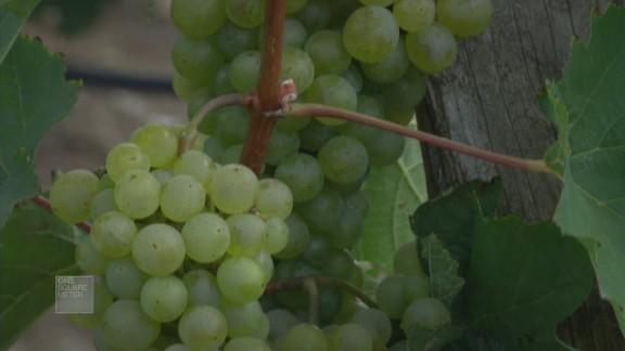 spc one square meter vineyard ocoa bay_00021319.jpg