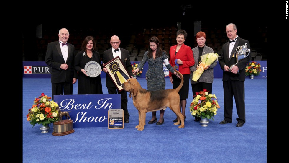 Nathan, a bloodhound, won best in show at the National Dog Show on November 16 in Philadelphia. The show aired on NBC on Thursday, November 27.
