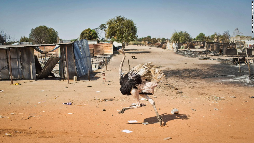 <strong>January 12:</strong> An ostrich runs by destroyed buildings in Bentiu, South Sudan, after government forces retook the provincial capital from rebel forces. After decades of war, South Sudan seceded from Sudan in 2011, making it the world's youngest nation. Since then, South Sudan has become embroiled in its own internal conflict.