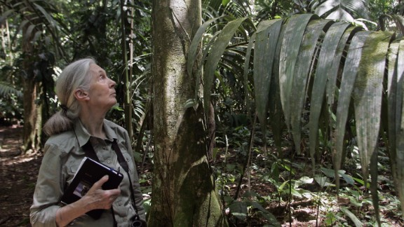 British primatologist Dame Jane Goodall, 81, is best known for her long-term research on wild chimpanzees in Tanzania. She founded, the Jane Goodall Institute Research Center in Gombe National Park, which is the world
