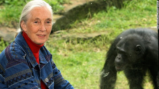 World-renowned primatologist and chimpanzee expert Dr Jane Goodall.