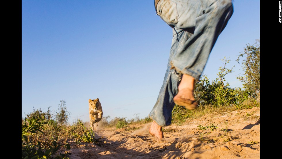 <strong>May 9:</strong> Valentin Gruener runs with a lioness named Sirga at a private reserve in Botswana. Gruener helped raise Sirga since she was a cub.