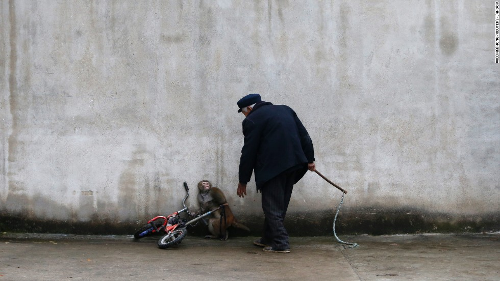 A monkey cowers as its trainer approaches it during training for a circus in Suzhou, China, on Saturday, November 29. Suzhou is known as the hometown of circus troupes in China. It has more than 300 circus troupes.