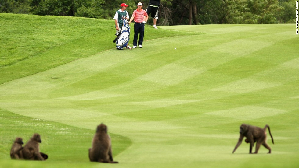 England's Luke Donald negotiates with the animals as they get comfortable back in 2007.