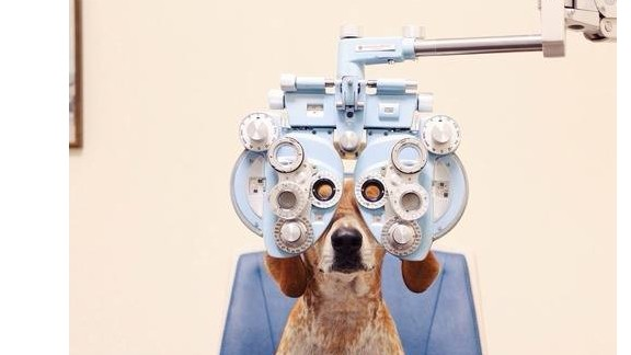 Nexvet are among the companies revolutionizing specialist medicine for pets.