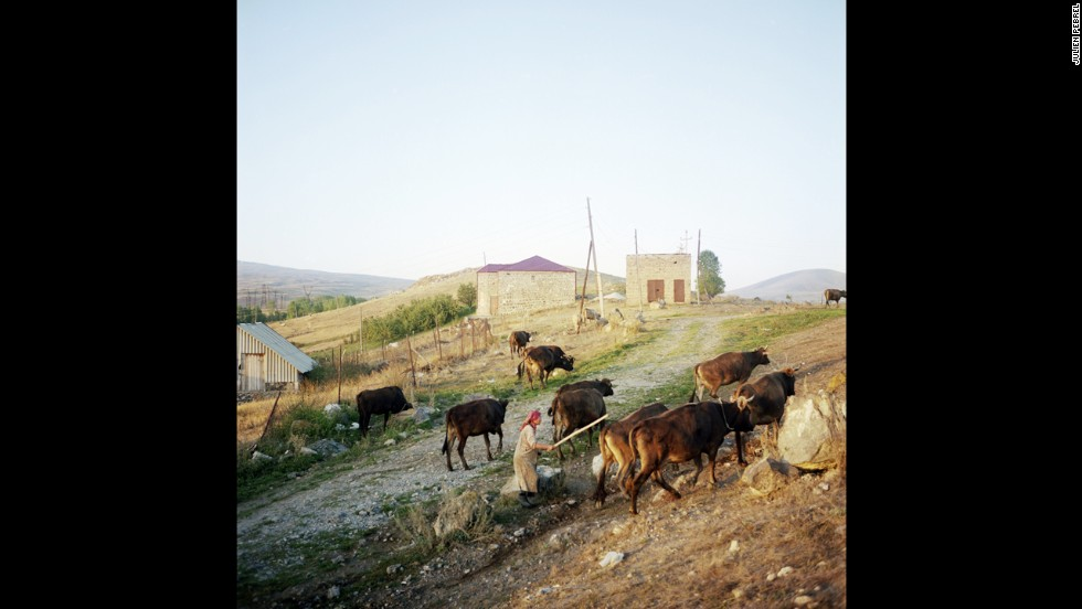 A woman herds cattle in Lichk. With most of the village's men gone, the women have to do everything themselves, from working the land to herding the livestock and raising children.
