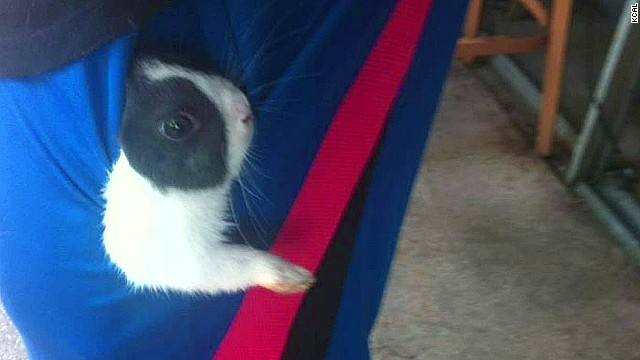 Cops: Actor killed, ate ex's pet rabbit