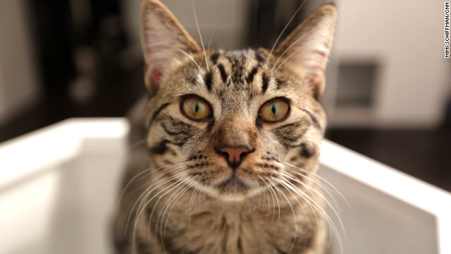 Meet the stars of New York's cat cafe