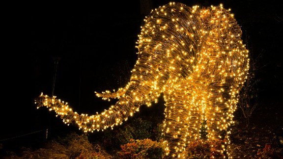 In Washington, D.C., Zoolights turns Smithsonian's National Zoo into a 500,000-LED-light winter wonderland.