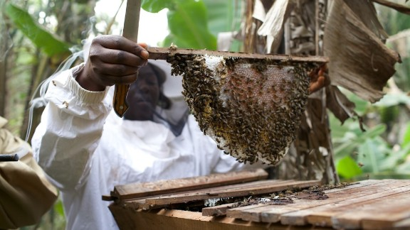 "Fumsi explains: ""I'd always had this idea of working with women because I came from a single home where my mother raised me all by herself. She was a widow and I was two. So this passion of working with women I developed from there."" Here, local beefarmer Bridget Mbah extracts honey from a top bar bee hive."