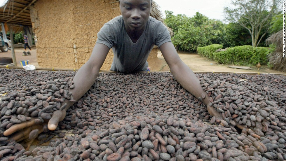 The cocoa beans are fermented for six days with three turnings before drying for another seven days in the sun.
