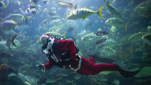 A diver in a Santa outfit feeds fish as part of Christmas celebrations at Aquaria KLCC underwater park in Kuala Lumpur, Malaysia.