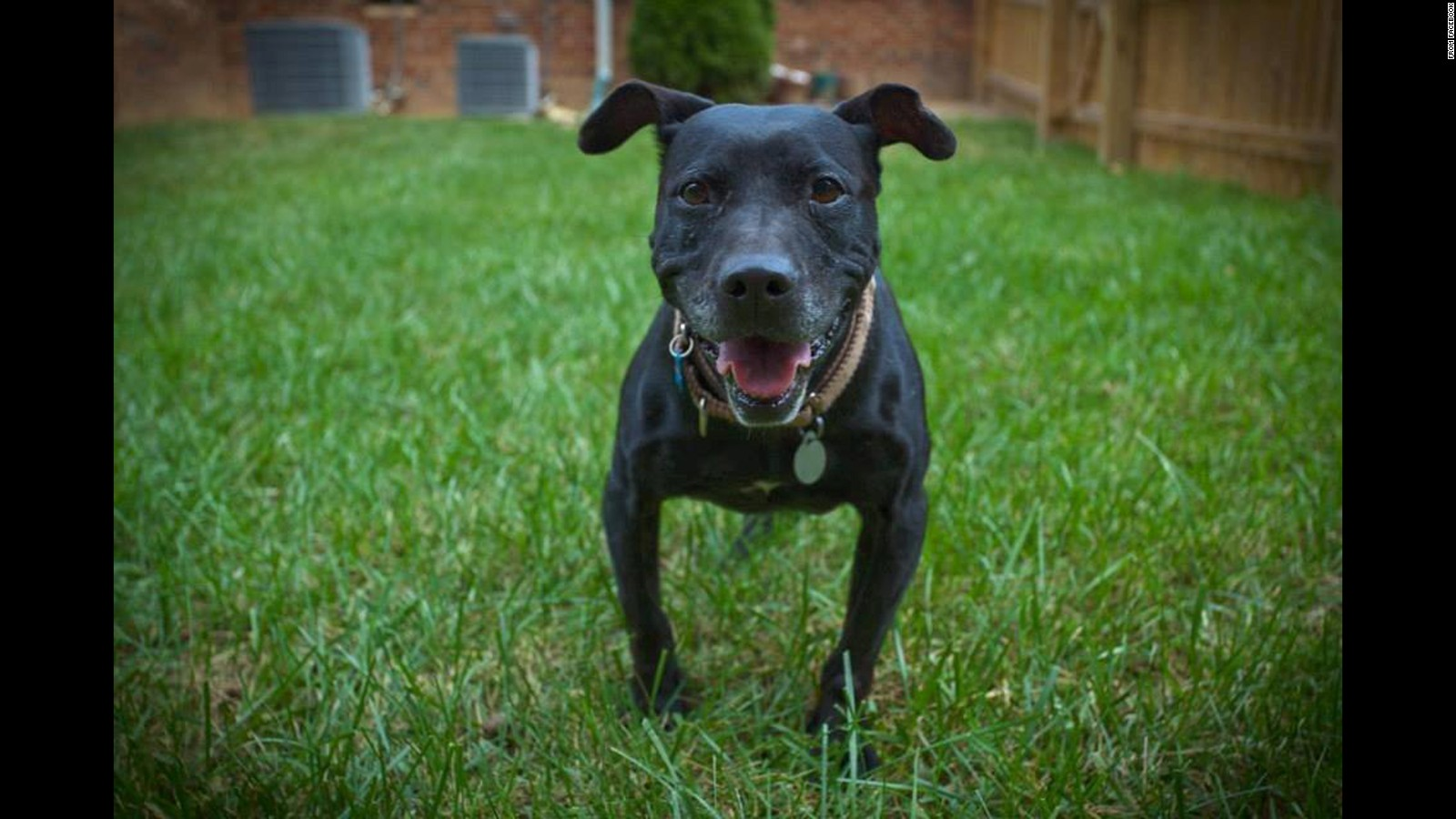 Insurance for Pit Bulls, Find Insurers That Accept