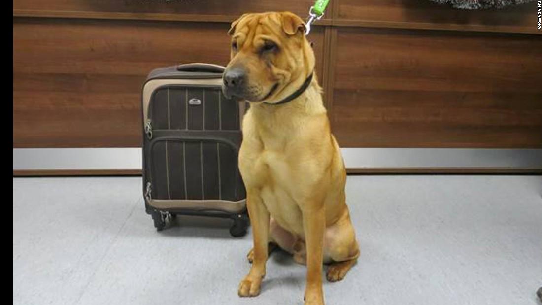 81efa9ef1 Dog abandoned with suitcase at train station - CNN