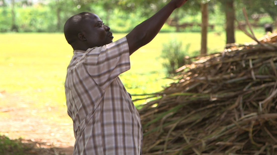 For farmers like Mwanja Banuli, harvesting this rough, woody crop is heavy going but valuable.