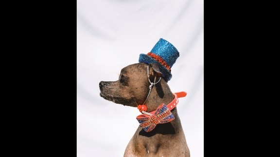 """Mugly wears the outfit he wore when he won the """"World's Ugliest Dog"""" contest."""