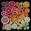 emily blincoe arrangements citrus