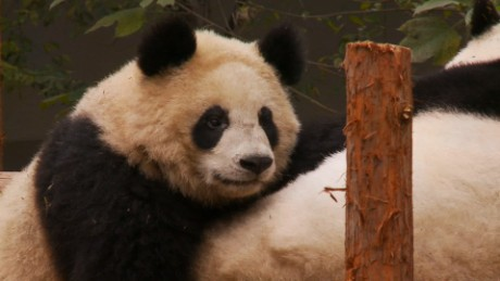 Deadly panda virus in China
