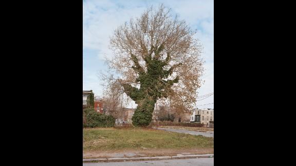 A tree on West Norris Street, near North Croskey Street, in 2013.