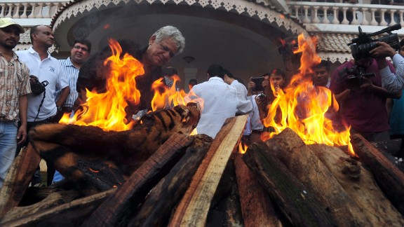 Indian Bollywood film actor Om Puri (center) lights a pyre at an official burning of wildlife contraband, including tiger and leopard skins and bones, held by forest officials in Mumbai on July 30, 2013.