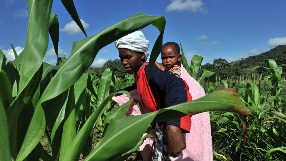 Whether it's undernourishment or obesity, there are solutions for countries wanting to tackle issues related to poor diets -- looking at where research and development grants go, is but one example, as much of this money typically goes to increasing the yields of rice, maize and wheat, Haddad says.   Pictured here, a woman checks maize crops on a farm in Zimbabwe.