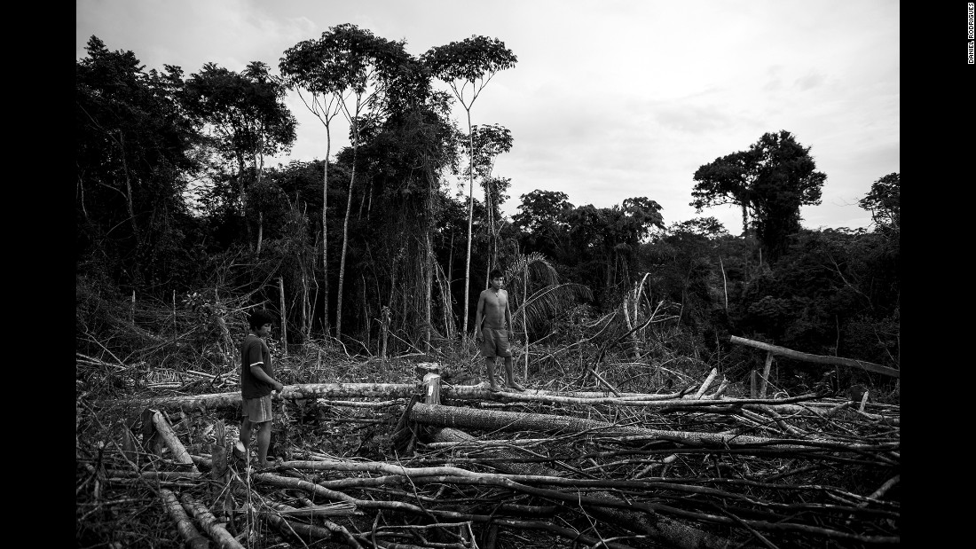 The tribe's habitat is being destroyed by illegal logging.