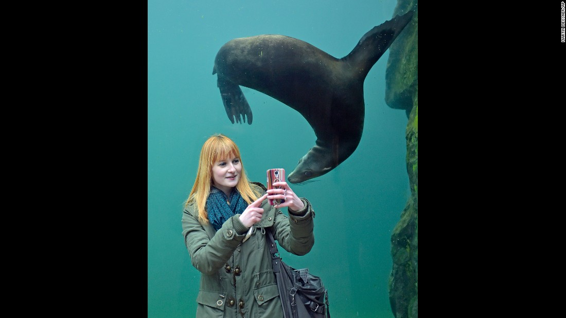 A woman snaps a selfie with a seal at the zoo in Gelsenkirchen, Germany, on Monday, January 26.