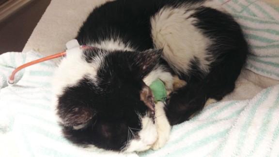Bart, still in custody at the Tampa Humane Society, takes a morning nap.