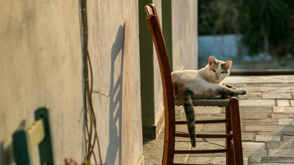 A cat enjoys the slow vibe at Thea's Inn.