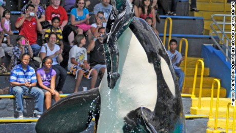 why whales should not be kept in captivity