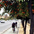 Seville cycling 6