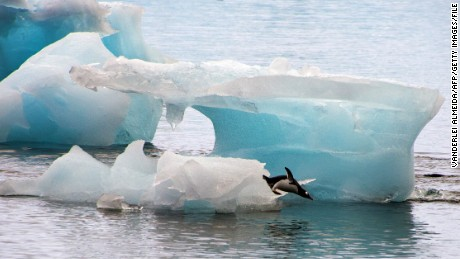 A penguin dives from an ice block in Antarctica in March 2014.