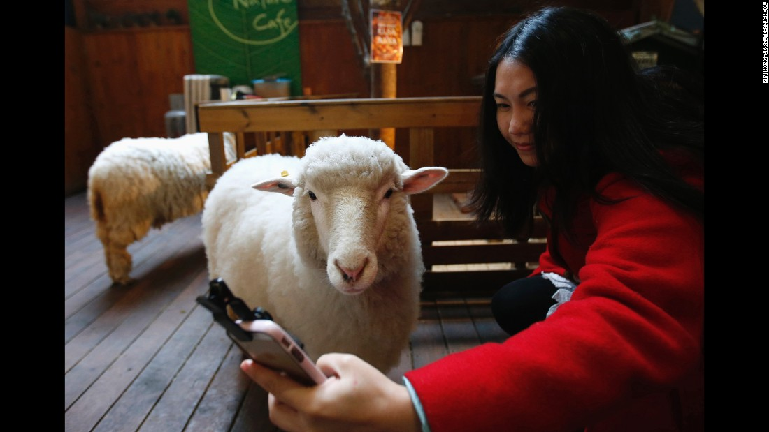 "A woman snaps a selfie at a sheep cafe in Seoul, South Korea, on Friday, February 6. Many people are visiting the cafe ahead of Chinese New Year. According to the Chinese lunar calendar, the <a href=""http://www.cnn.com/2015/02/08/asia/china-sheep-babies/"" target=""_blank"">Year of the Sheep</a> (sometimes called ram or goat) begins on February 19."