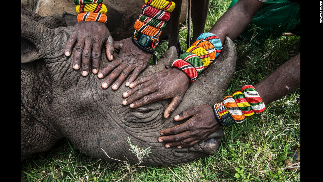 Young Samburu warriors encounter a rhino for the first time in their lives. Most people in Kenya never get the opportunity to see the wildlife that exists in their own backyard.