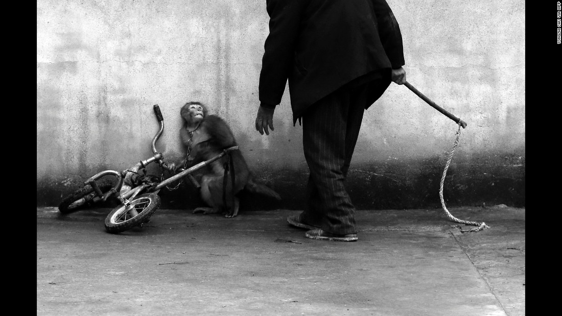 A monkey being trained for a circus cowers as its trainer approaches. With more than 300 troupes, Suzhou is known as the home of the Chinese circus.