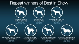 Westminster Best In Show 2020.Westminster Dog Show Fast Facts Cnn