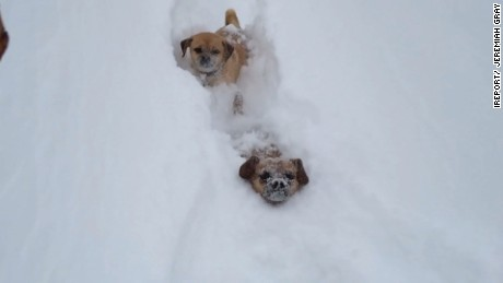 See dogs race through feet-high snow