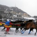 skijoring white turf field