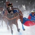 skijoring snow covered racer